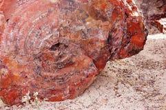 Petrified-Forest-National-Park, Arizona, USA Stock Photography