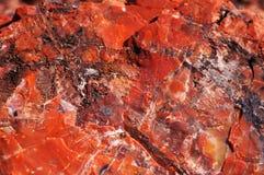 Petrified-Forest-National-Park, Arizona, USA Royalty Free Stock Image