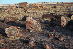 Petrified Forest National Park Royalty Free Stock Image