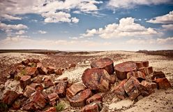 Petrified Forest National Park, USA Stock Photo