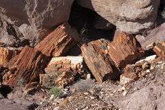 Petrified Forest NP. Petrified Wood at Petrified Forest NP, Arizona Royalty Free Stock Photos