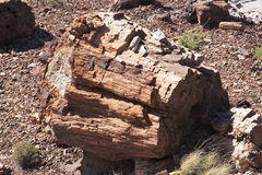 Petrified Forest NP. Petrified Wood at Petrified Forest NP, Arizona Stock Photo