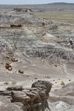 Petrified Forest of the Past Royalty Free Stock Photos