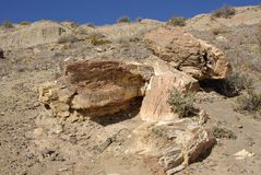 Petrified forest in Patagonia Royalty Free Stock Photography