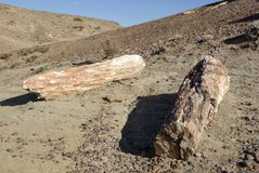Petrified forest, Patagonia Royalty Free Stock Photo