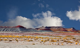 Petrified Forest. Scenic Petrified Forest with a dark blue sky. Located in the state of Arizona Stock Images