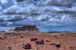 Petrified Forest Storm Stock Image