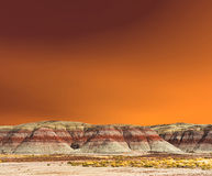 Petrified Forest Stock Photography