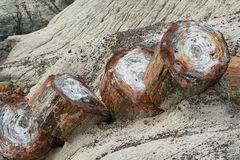 Petrified forest trunk Royalty Free Stock Photos