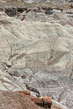 Petrified Forest View Royalty Free Stock Photos