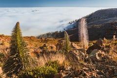Lava landscape Teide volcano Tenerife Canary Royalty Free Stock Photography