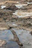 Petrified log at Curio Bay. Petrified tree log at Curio Bay in New Zealand Royalty Free Stock Image