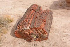 Petrified Log in the Desert Royalty Free Stock Image