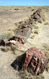 A Petrified Log in Petrified Forest Stock Image