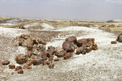 Free Petrified Logs At Petrified Forest National Park Stock Images - 30884164