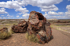 Petrified Logs-Petrified Forest National Park Royalty Free Stock Photography