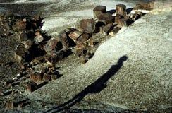 Petrified National Forest in Arizona Stock Image