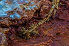 Petrified Plant Crystal Geyser Utah Close-up Stock Image