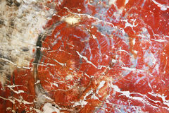 Petrified polishes wood in Petrified Forest Royalty Free Stock Images