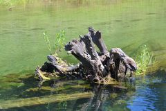 Petrified Stump In The Water stock photo