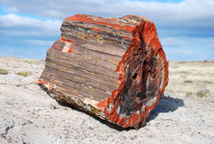 Petrified tree Stock Photography