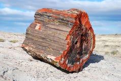 Petrified tree Stock Photography