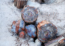 Petrified tree Royalty Free Stock Photos