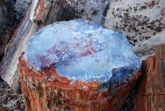Petrified tree Royalty Free Stock Photos