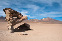 Petrified tree. In Andes, Bolivia Stock Images