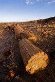 Petrified tree. In petrefied forest national park stock image