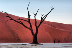 Petrified tree against majestic red dunes Royalty Free Stock Photos