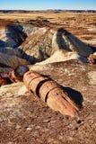 Petrified Tree Royalty Free Stock Image