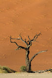 Petrified tree at Dead Vlei Royalty Free Stock Images