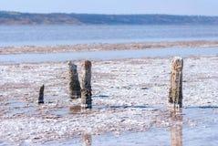 Petrified tree stubs on the lake, Kuyalnik, Ukraine Royalty Free Stock Photography