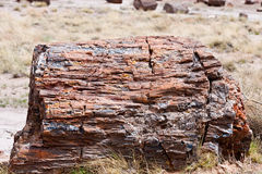 Petrified tree stump Royalty Free Stock Photo