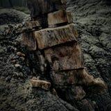 Petrified tree. Trunk Stock Photo