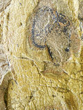 petrified tree trunk in stone Royalty Free Stock Photos