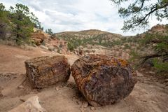 Petrified tree trunk, Utah stock photos