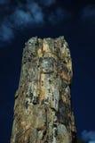 Petrified Tree: Yellowstone National Park Royalty Free Stock Photos