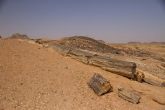 Petrified trees in Sudan stock photos