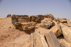 Petrified trees in Sudan royalty free stock photo