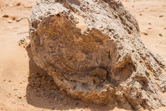 Petrified trees in Sudan. Petrified wood is a special type of fossilized remains of terrestrial vegetation. It is the result of a tree or tree-like plants having stock photos