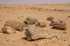 Petrified trees in Sudan, Royalty Free Stock Photography