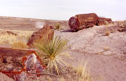Petrified Trio. Petrified wood in the Painted Desert, USA royalty free stock image