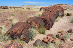 Petrified trunks and wood in Petrified Forest National Park, Arizona,  USA Stock Photo