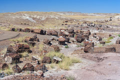 Petrified trunks and wood in Petrified Forest National Park Arizona USA Stock Photo