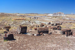 Petrified trunks and wood in Petrified Forest National Park Arizona USA Royalty Free Stock Images