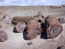 Petrified Wasteland Stock Photo
