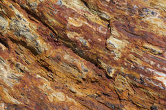 Petrified wood. Can preserve the original structure of the wood in all its detail, down to the microscopic level. Structures such as tree rings and the various Stock Images