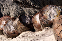 Petrified Wood Royalty Free Stock Photos